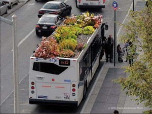 toit bus vegetalise
