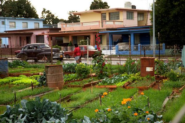 Comment les cubains ont converti leur île au bio