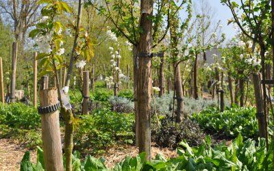 Qu'est ce que la permaculture ?