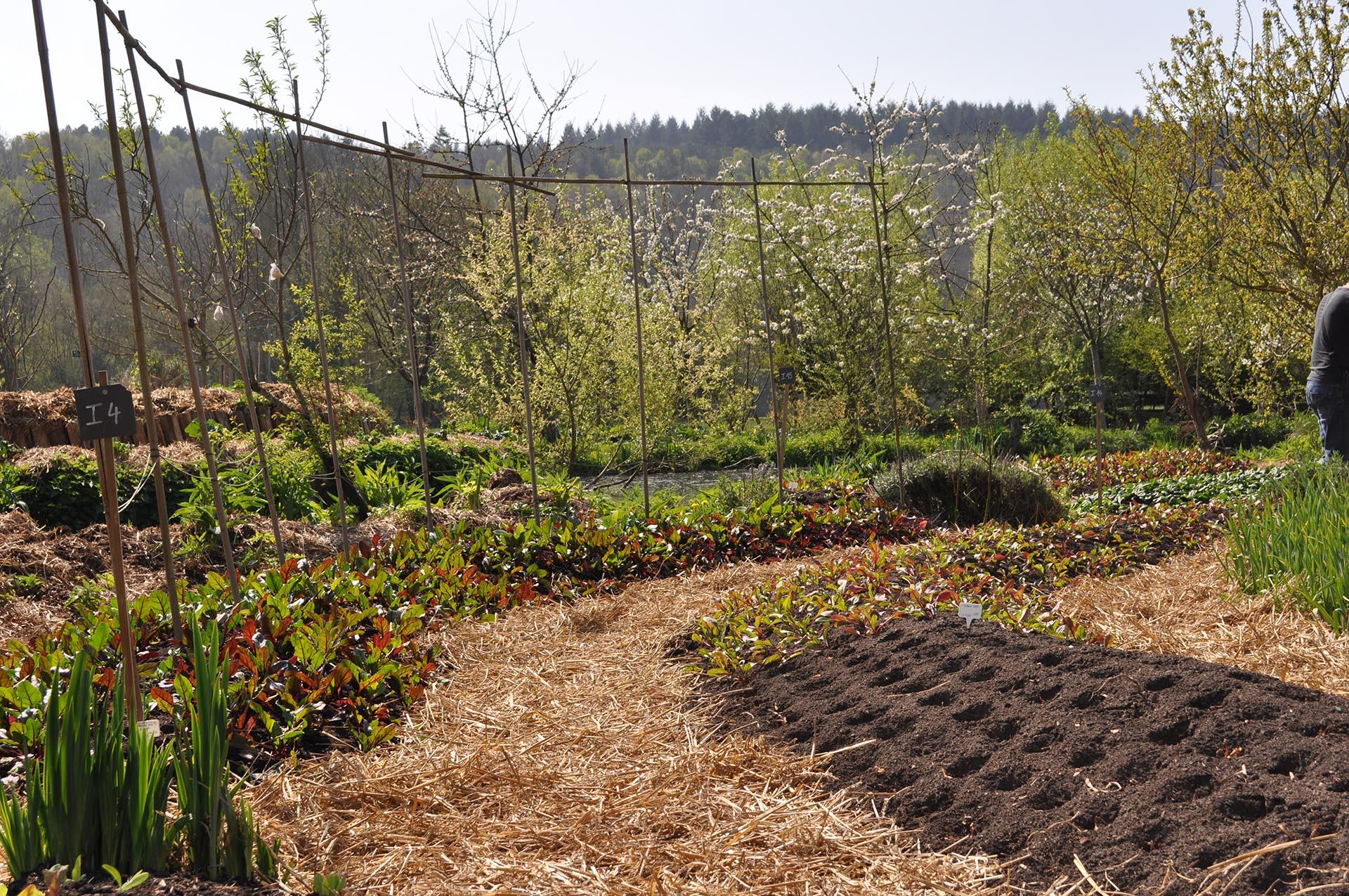 Qu est ce que la permaculture vertumne paysage - Qu est ce que la permaculture ...
