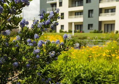 Jardin traversant près du Mont St Michel