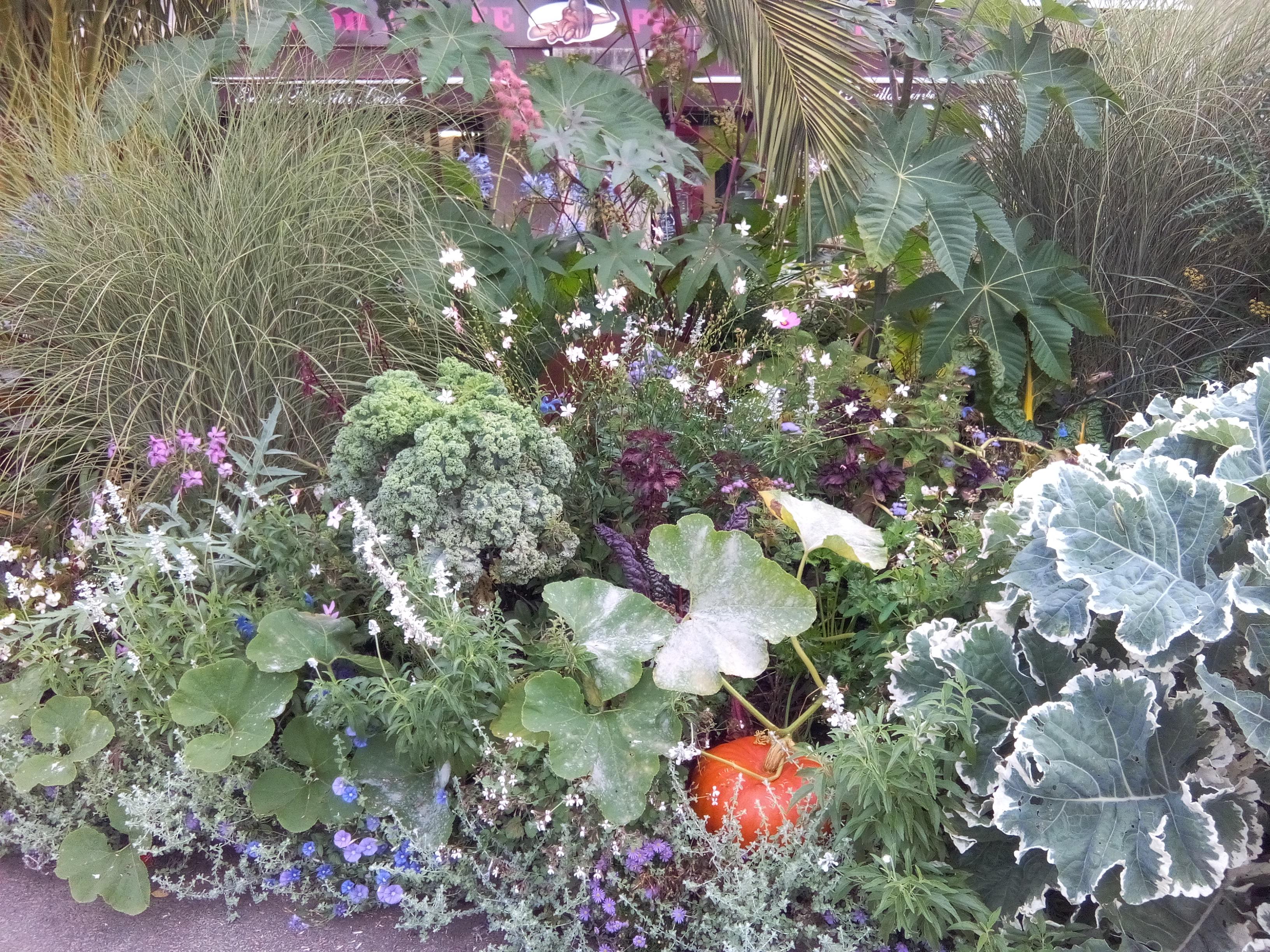 Plantes De Terrasse Arbustes jardin potager ou jardin d'ornement ? - vertumne paysage